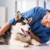 Список услуг ветеринарных клиник на Petstory
